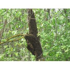 Размышления на тему пчел